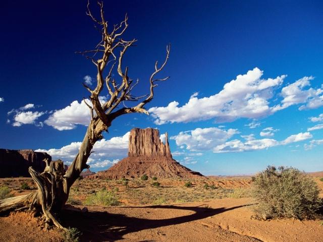 deserto_california_DESERTO-MOJAVE